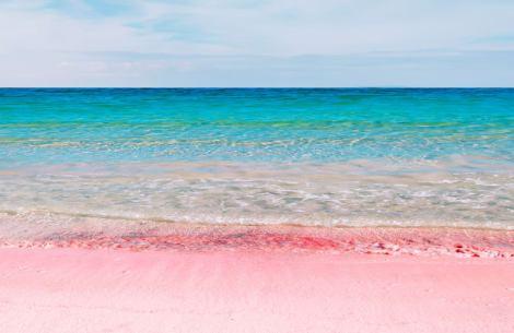 pink sand bermuda